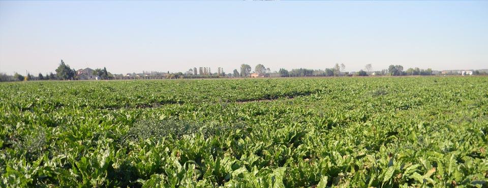 COPROB - Cooperativa Produttori Bieticoli Società Cooperativa Agricola